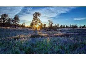 地球,草地,自然,树,花,蓝色,花,日出,壁纸,图片