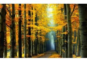 小路,森林,秋天,黄色,树,叶子,壁纸,图片