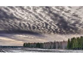 云,自然,树,冬天的,领域,天空,壁纸,图片