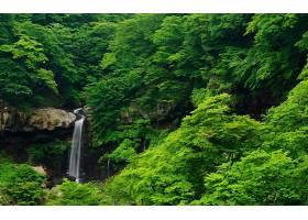 瀑布,瀑布,森林,树,绿色的,壁纸,(4)图片