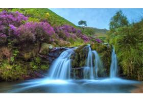 瀑布,瀑布,花,弹簧,紫色,花,壁纸,图片