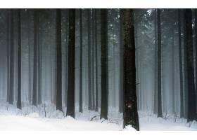 森林,树,冬天的,壁纸,图片