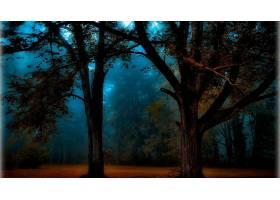 森林,蓝色,树,雾,壁纸,图片