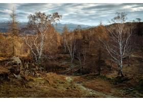 小路,秋天,自然,树,森林,壁纸,图片