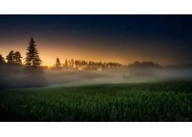 雾,自然,日出,壁纸,图片