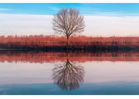 地球,反射,自然,树,秋天,壁纸,图片