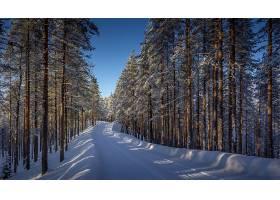 地球,冬天的,自然,森林,雪,树,小路,壁纸,图片