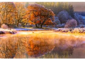 地球,反射,自然,树,秋天,湖,壁纸,(1)图片