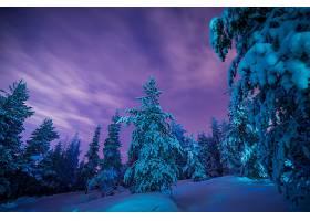地球,冬天的,自然,森林,雪,黄昏,蓝色,树,壁纸,图片