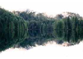 地球,反射,自然,森林,湖,雾,壁纸,图片