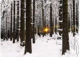 地球,冬天的,自然,阳光,雪,树,森林,壁纸,图片