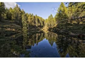 地球,湖,湖,自然,森林,树,反射,壁纸,图片