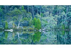 地球,反射,自然,湖,森林,壁纸,(2)图片