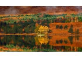 地球,反射,自然,湖,森林,秋天,壁纸,图片