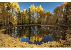 地球,反射,自然,湖,秋天,叶子,树,壁纸,图片