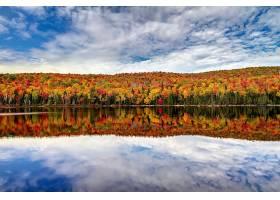 地球,反射,自然,湖,秋天,叶子,森林,壁纸,图片
