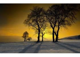 地球,冬天的,树,雪,自然,日落,壁纸,图片