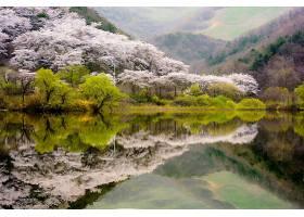 地球,反射,自然,湖,花,树,叶子,壁纸,图片