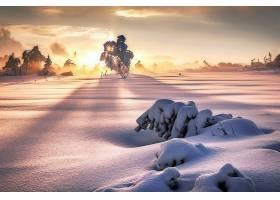 地球,冬天的,自然,雪,阳光,日出,壁纸,图片