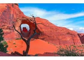 地球,拱门,自然,沙,岩石,沙漠,死亡的,树,壁纸,