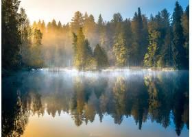 地球,反射,自然,雾,森林,树,壁纸,图片