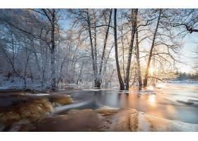 地球,冬天的,自然,风景,冰,树,壁纸,图片