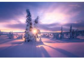 地球,冬天的,自然,风景,雪,阳光,日出,壁纸,图片