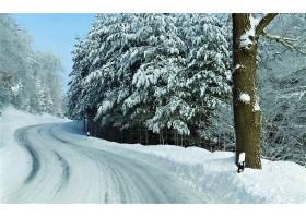 地球,冬天的,路,雪,树,壁纸,(1)图片