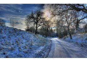 地球,冬天的,路,雪,树,壁纸,(4)图片