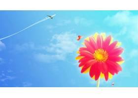 地球,大丁草,花,花,天空,蓝色,蝴蝶,飞机,粉红色,花,壁纸,图片