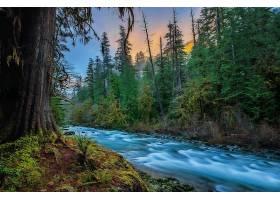 地球,河,自然,树,森林,泡沫,壁纸,图片