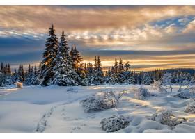 地球,冬天的,轨道,自然,树,雪,云,壁纸,图片
