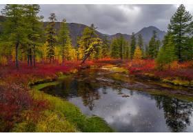 地球,河,自然,树,秋天,反射,壁纸,图片