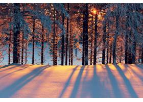 地球,冬天的,阳光,树,森林,壁纸,图片