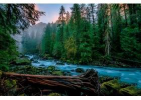 地球,河,自然,森林,壁纸,(2)图片