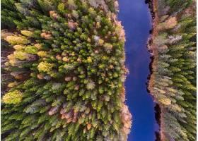 地球,河,自然,森林,树,天线,壁纸,图片