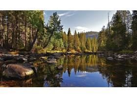 地球,河,自然,水,森林,反射,石头,壁纸,图片