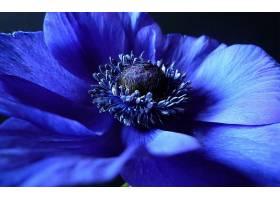 地球,海葵,花,特写镜头,蓝色,花,花,壁纸,图片