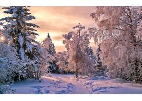 地球,冬天的,雪,树,小路,森林,壁纸,图片