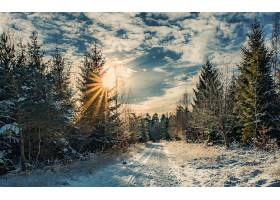 地球,冬天的,自然,森林,小路,天空,阳光,树,壁纸,图片