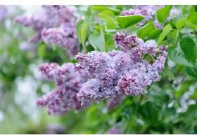 地球,淡紫色,花,自然,花,粉红色,花,壁纸,(1)