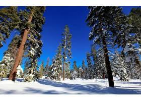 地球,冬天的,自然,森林,树,雪,壁纸,图片