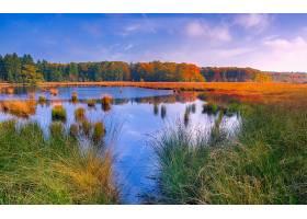 地球,湖,湖,池塘,芦苇,风景,秋天,草,森林,水,农村,自然,壁纸,