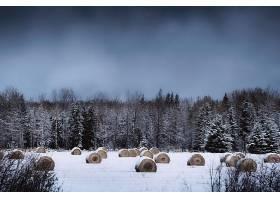 地球,冬天的,自然,森林,树,雪,干草堆,壁纸,图片