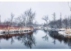地球,反射,自然,冬天的,湖,雪,树,壁纸,图片