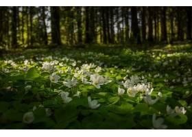 地球,海葵,花,自然,花,白色,花,壁纸,图片