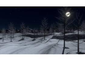 地球,冬天的,夜晚,晚上,雪,月球,树,壁纸,