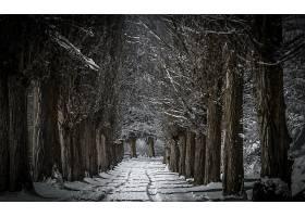 地球,冬天的,自然,小路,树,雪,绿树成荫,壁纸,图片