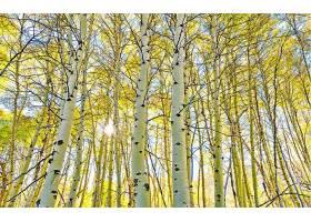 地球,桦树,秋天,太阳,阳光,壁纸,图片