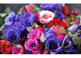 地球,海葵,花,花,彩色,酒香,富有色彩的,红色,花,紫色,花,粉红色,图片